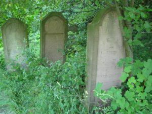 בית הקברות בסטרה צ'ורטקוב סבך צמחיה